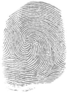 radial loop image